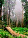 bosques-de-puebla-destacada-200×200